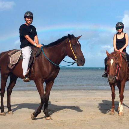aficionado caballos