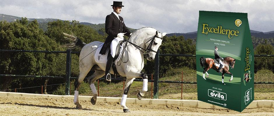 pienso-para-caballos-excellence-cool