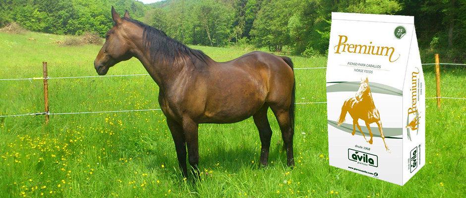pienso-para-caballos-premium-equimix-piensosavila low