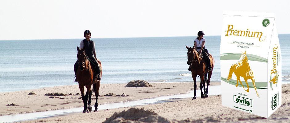 pienso-para-caballos-premium-piensosavila low