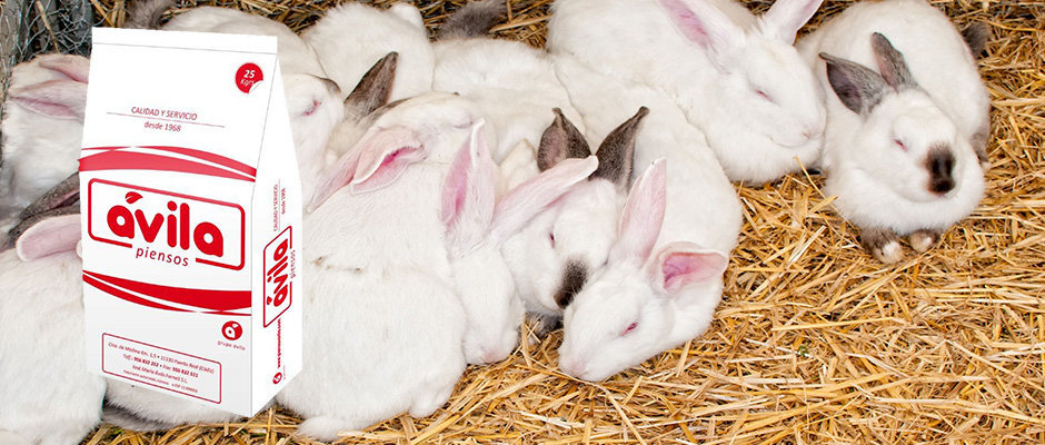 pienso-para-conejos-piensosavila